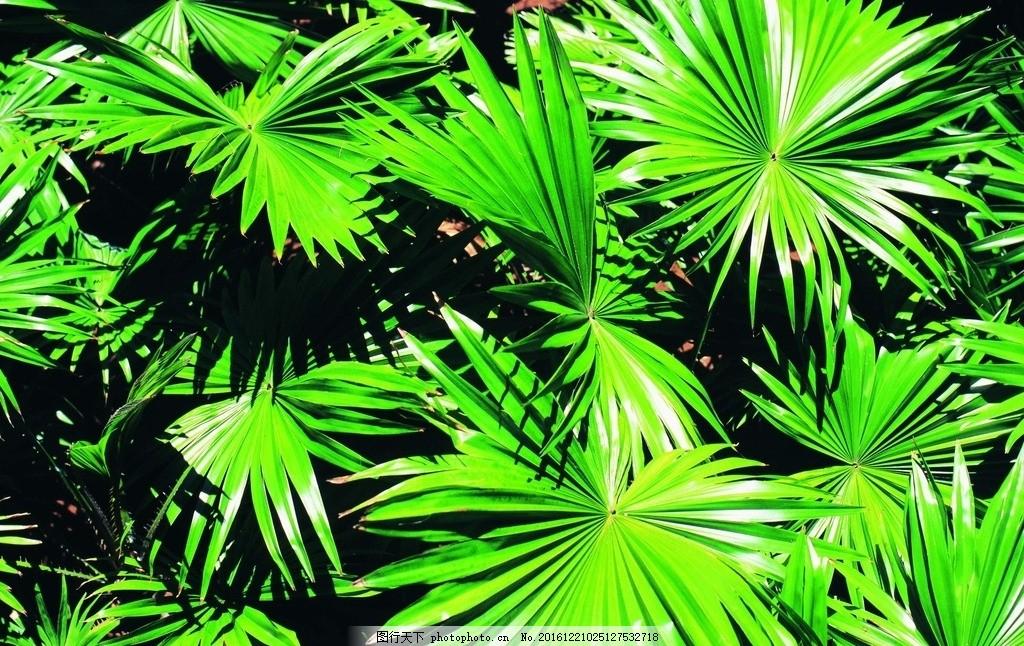 热带植物 绿色植物 观赏性植物 植物 绿植 叶子 绿叶 夏天 广州 绿化