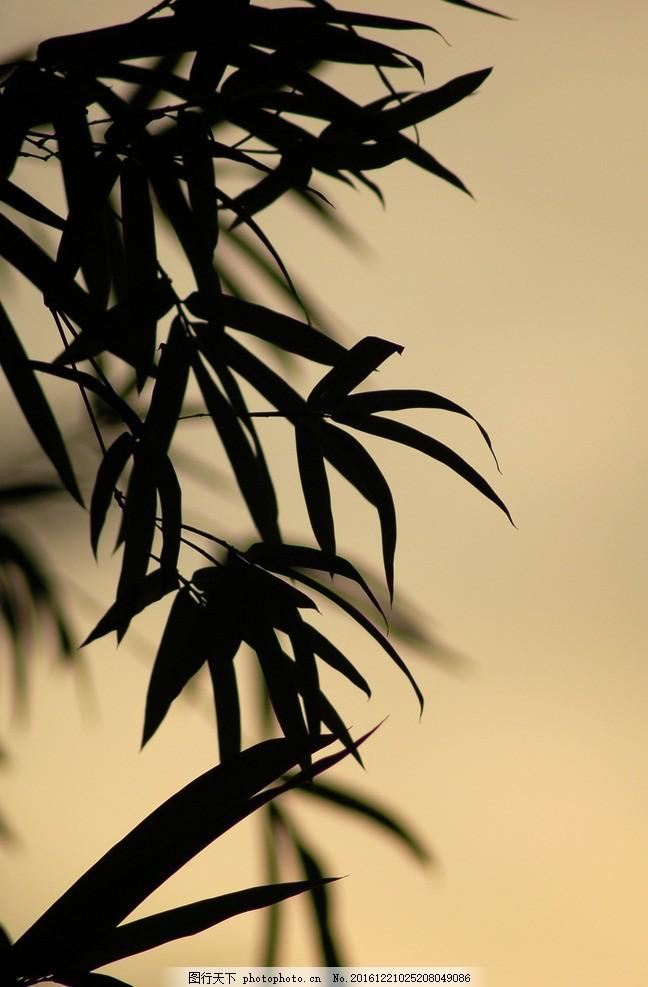 竹叶 竹子素材 毛竹林 绿竹翠竹 竹子图片 绿竹林 竹林素材 剪影 黑白