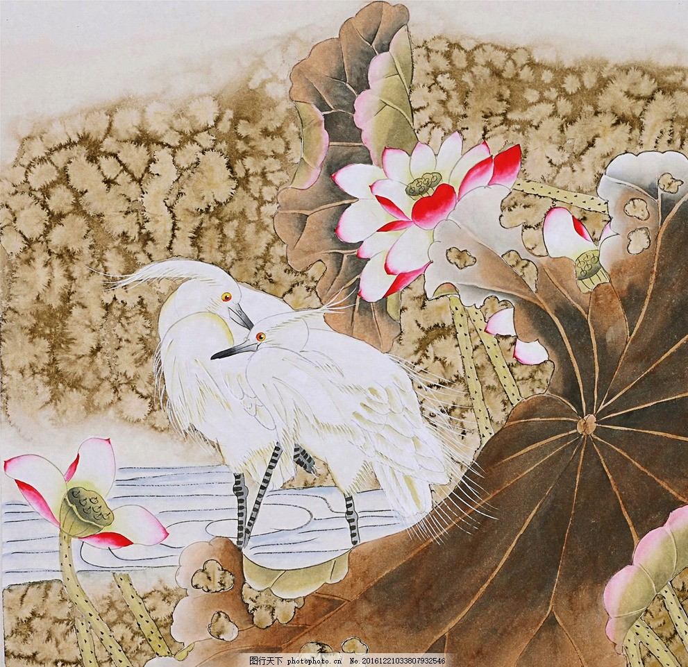 白鹭荷花 工笔画 白鹭 荷花 荷叶 鸟 荷花 设计 其他 图片素材 96dpi