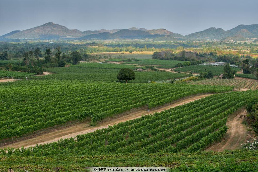 绿色农场风景图片
