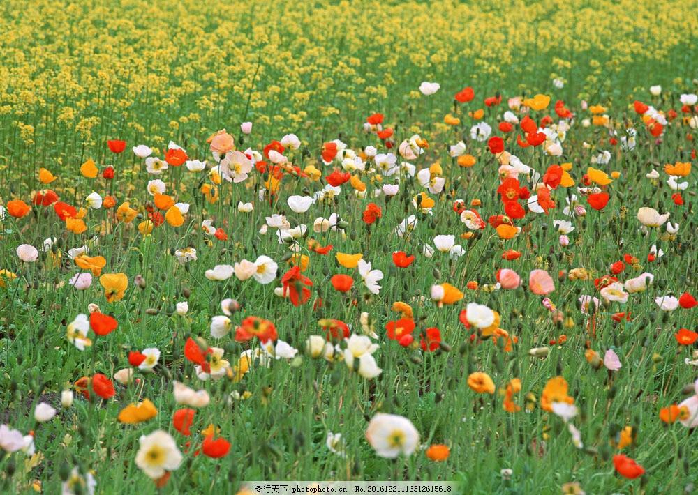 花丛 花丛图片素材 自然 风景 户外 美境 鲜花 鲜艳 绿色 山水风景