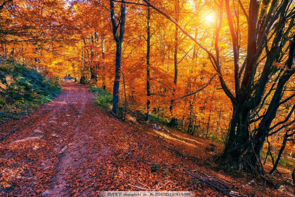 秋天道路落叶风景图片素材 秋天道路落叶风景 梧桐树 落叶 黄叶 道路