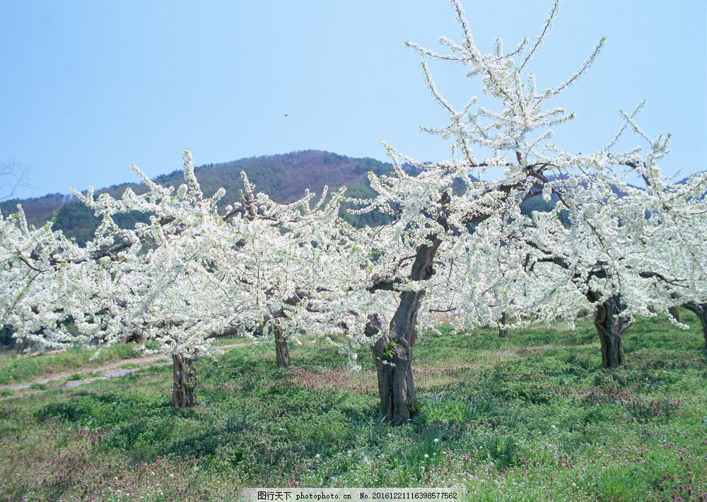 桃花树图片素材 风景 美境 四季风景 自然 三月 桃花树 桃花盛开 山水