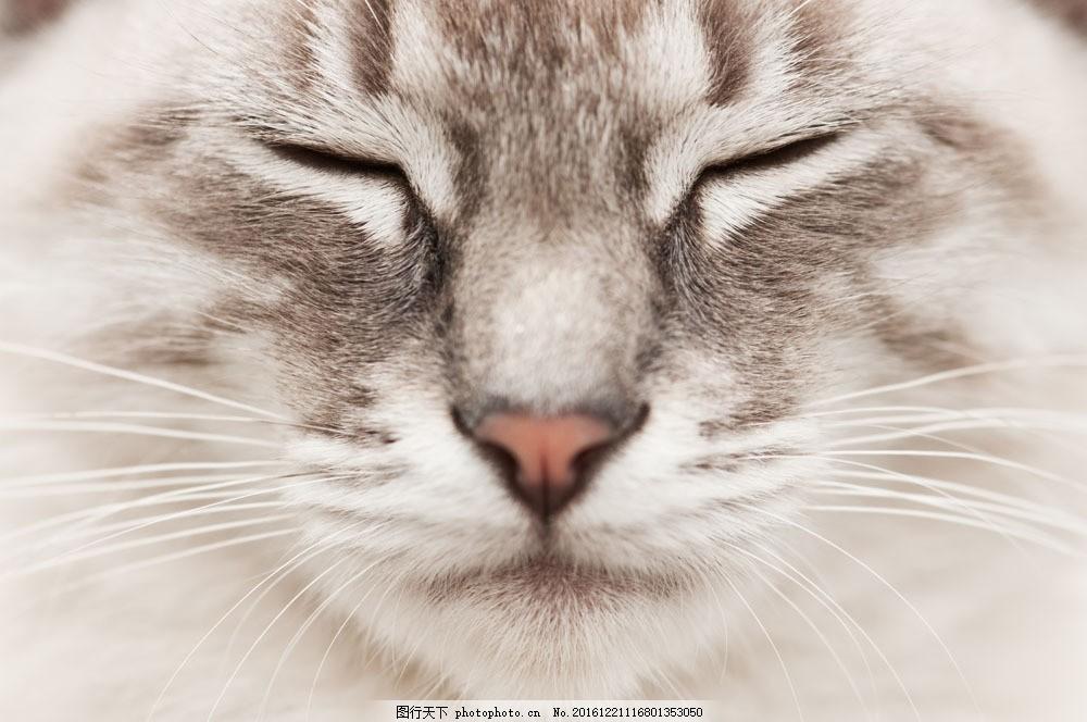 可爱小猫 可爱小猫图片素材 宠物猫 可爱动物 动物世界 猫咪图片