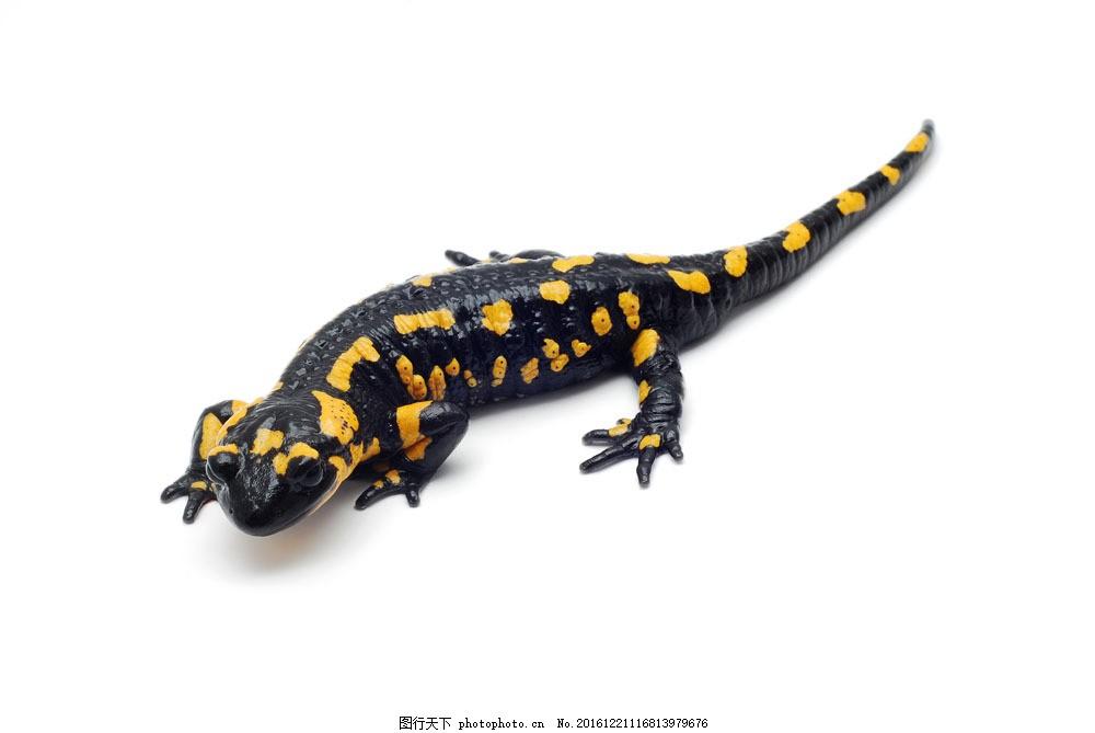 蜥蜴 蜥蜴图片素材 动物世界 野生动物 爬行动物 动物摄影 陆地动物