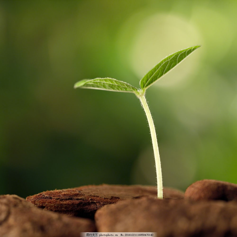 土壤中成长的幼苗图片