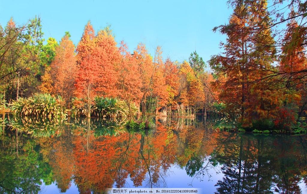 南京 钟山风景区秋色
