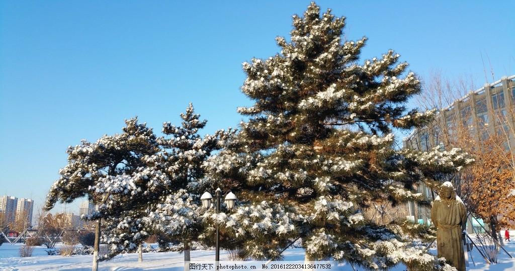 大雪 松树 蓝天 雪地 冬天 雪景 自然风景 摄影 自然景观 自然风景 30