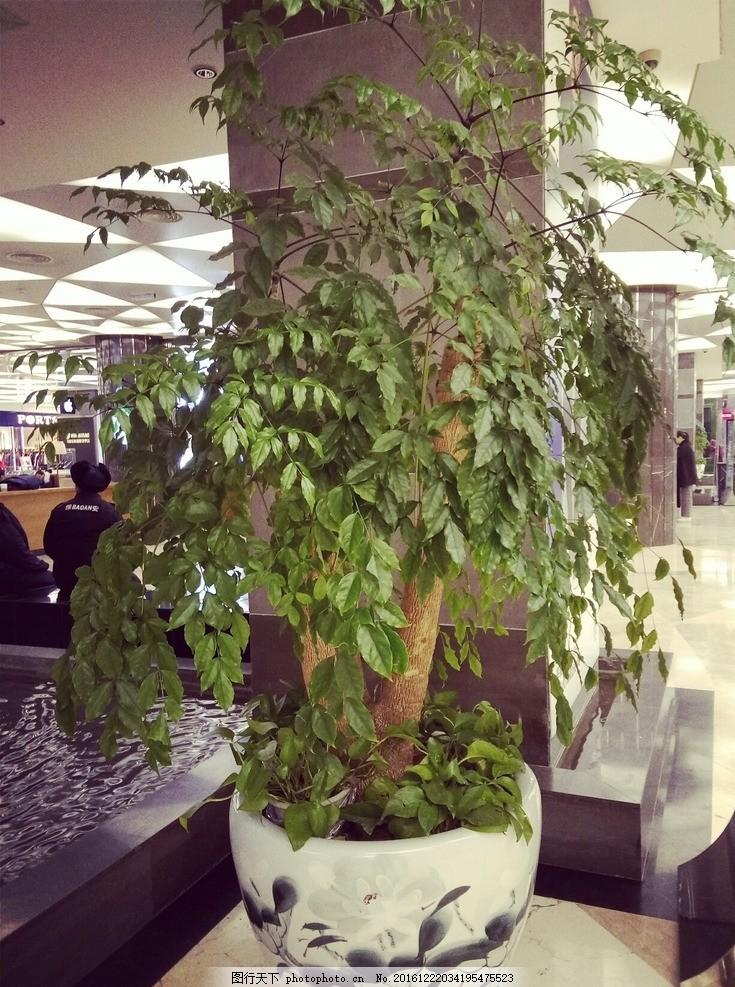 植物 绿色 装饰 盆景 盆栽 大美图片 摄影 自然景观 自然风景 72dpi