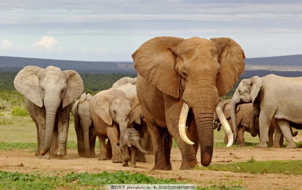 动物 森林之王 大自然 风景 大象 摄影作品专辑 摄影 生物世界 野生