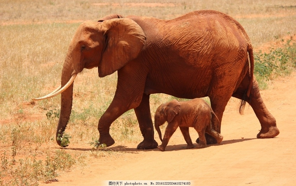 大象 动物 象群 家庭 大象家族 摄影