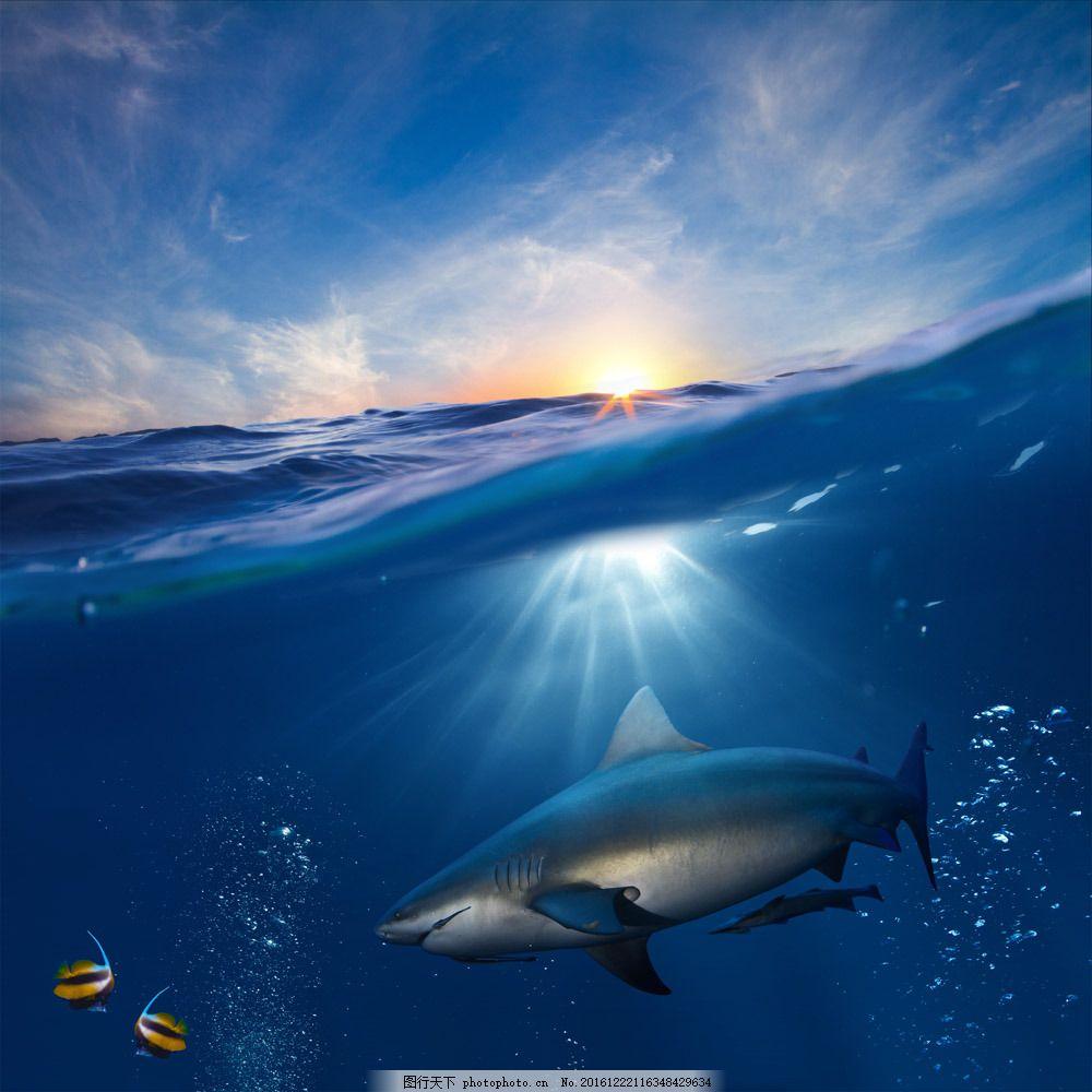 海洋里的鲨鱼图片素材 鲨鱼 海洋 海水 美丽海洋风景 水纹背景 阳光