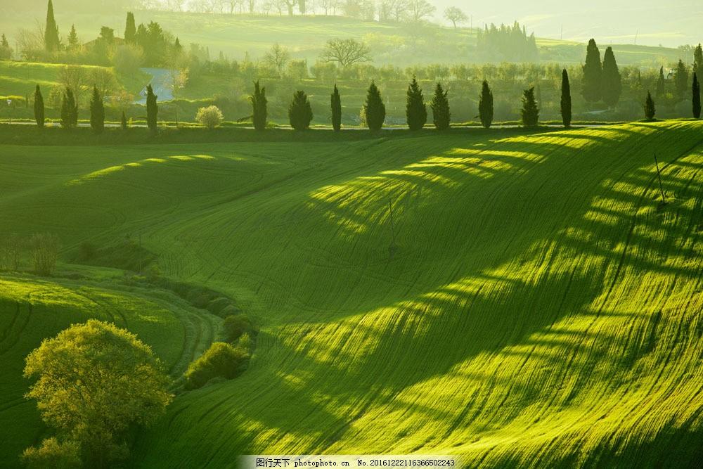 绿色山坡摄影图片素材 绿色 环保 山坡 高山 植物 大树 自然风光 景区