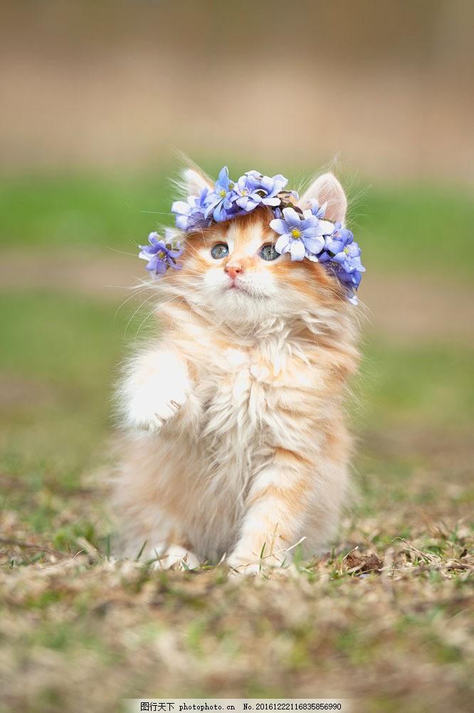 戴紫色花环的猫咪图片素材 紫色花环 猫咪 小猫 宠物 可爱动物 萌宠