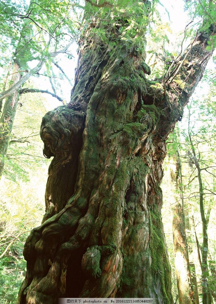 粗壮的树木图片素材 树 树木 树林 大树 树干 茂盛 大自然 花草树木
