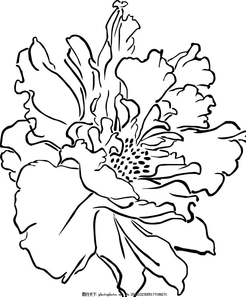 花朵 线形图 黑白 矢量图 花卉 玫瑰 动植物 设计 生物世界 花草 cdr