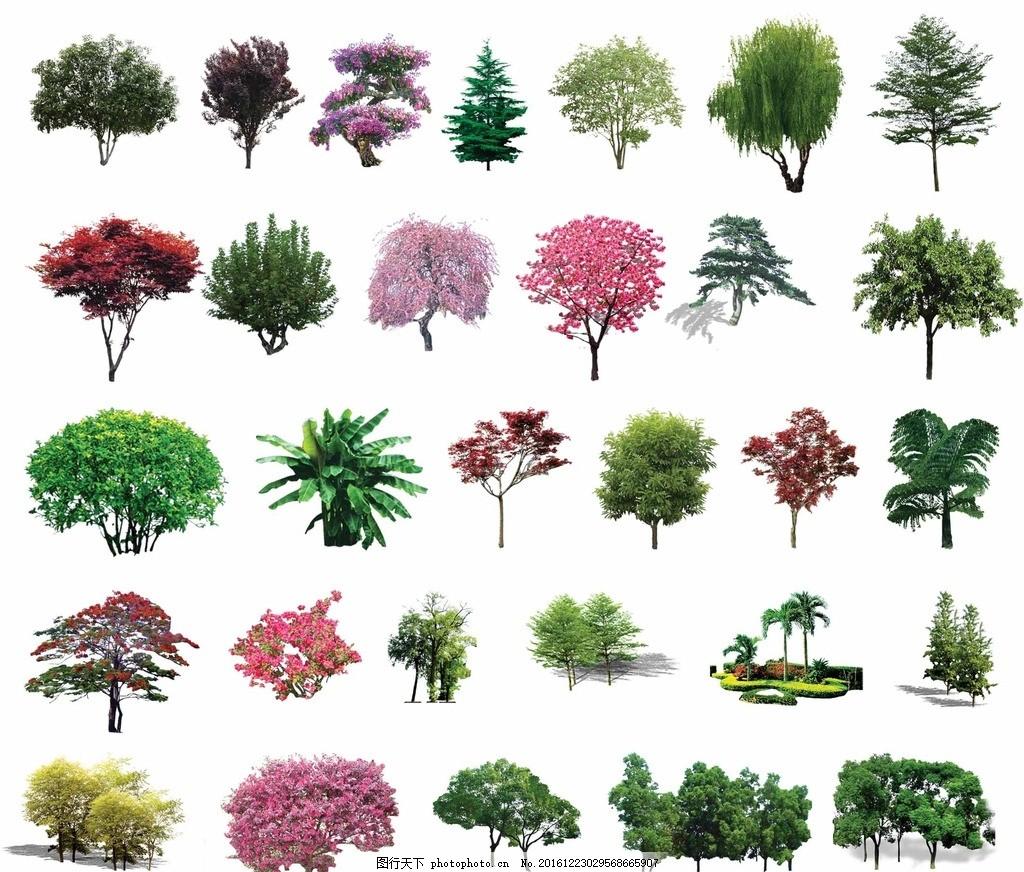 大树俯视手绘效果图