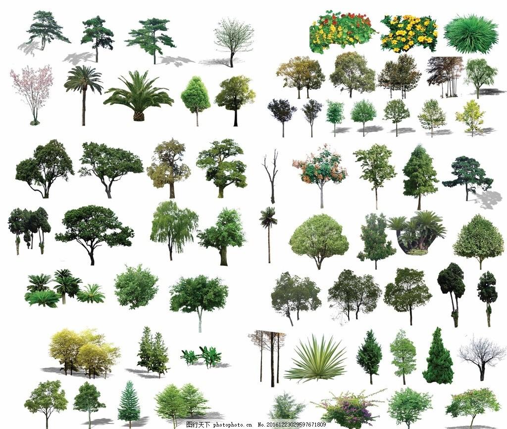 树木景观 松树素材 植物 绿化 银杏树 红杉树 亮化 柏树 园林