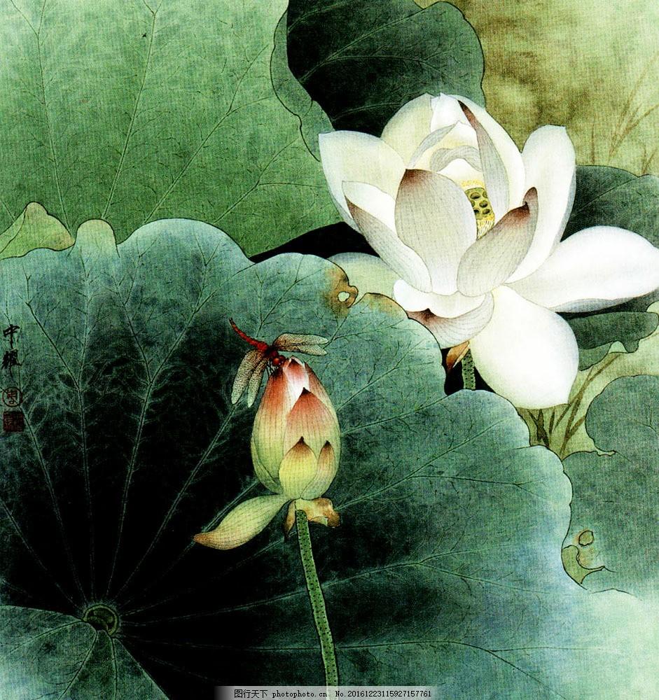 荷花蜻蜓国画 荷花蜻蜓国画图片素材 中国画 绘画艺术 装饰画 书画