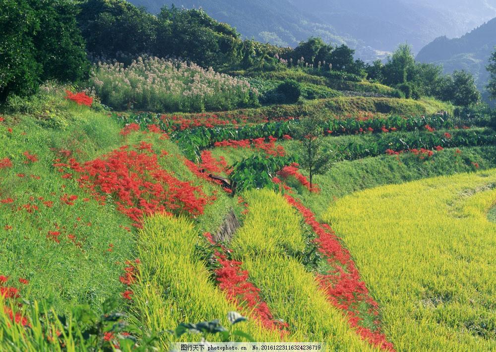 美丽田园风光图片素材 四季风景 美丽风景 美景 田园风光 春天风景