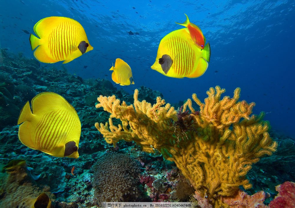 美丽珊瑚与鱼群 海洋海边 自然风光 海底世界 海洋生物 大海图片 风景
