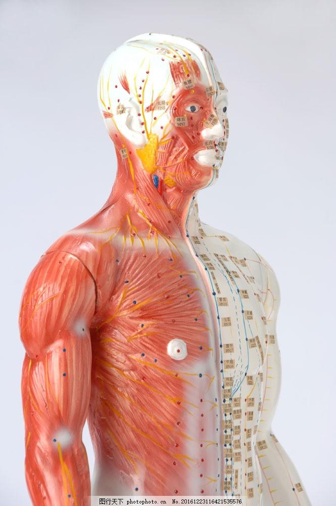男性人体穴位高清图_人体穴位图图片_科学技术_高清素材_图行天下图库