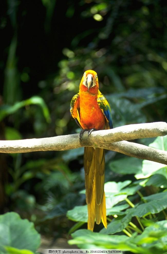 鹦鹉 动物 海洋动物 鸟 飞禽 走兽 鱼 动物与植物 摄影