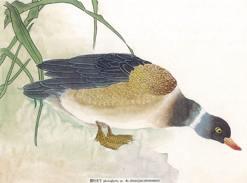 水墨鸭子国画图片素材 水墨画 国画动物 野鸭 鸭子 花鸟画 国画 中国
