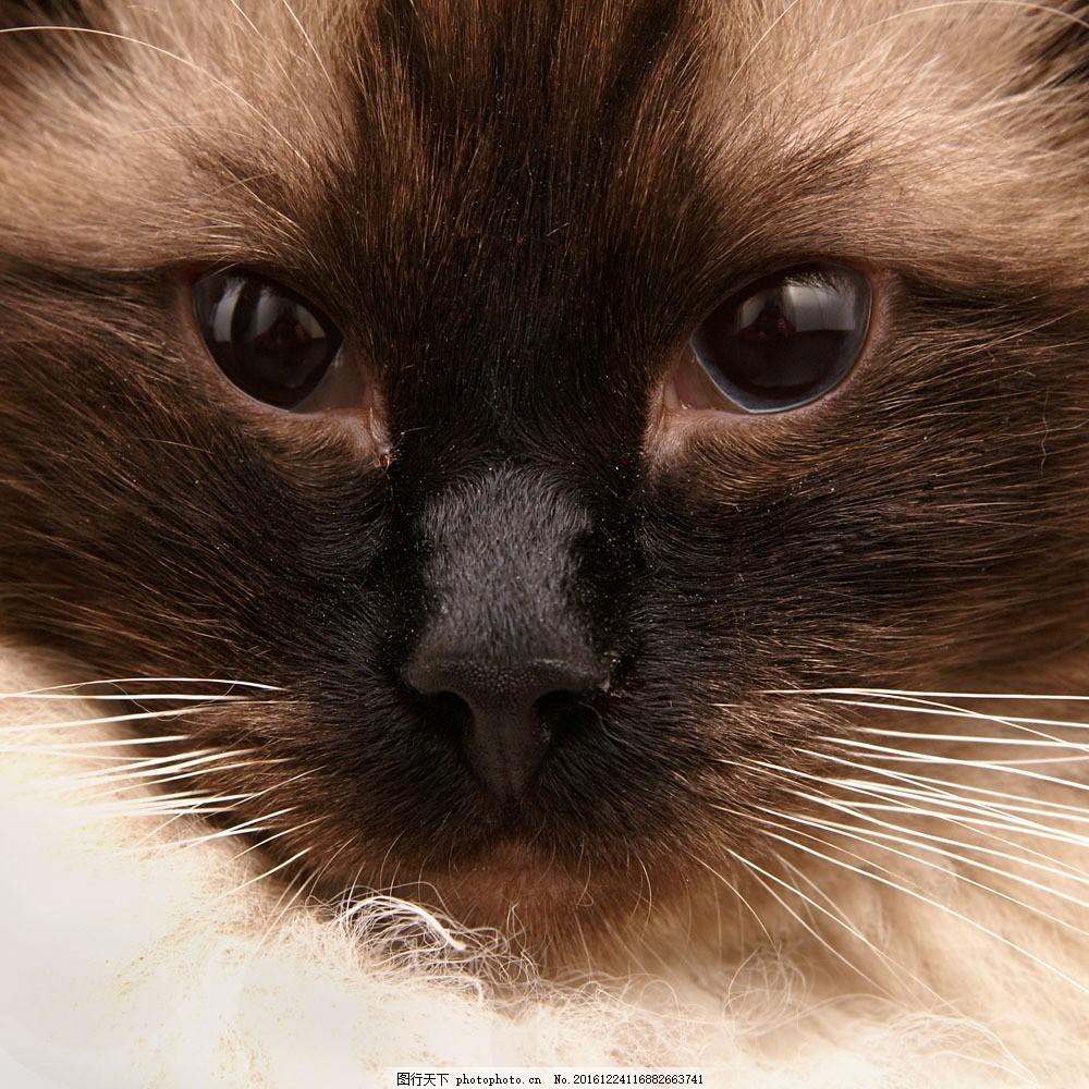 可爱小动物猫脸特写 可爱小动物猫脸特写图片素材 猫咪 猫眼睛 猫鼻子
