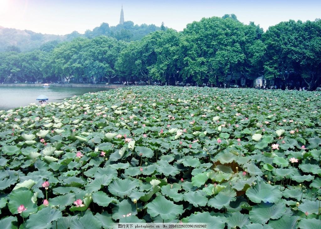 西湖 山水 摄影 风景 荷花 湖水 美景 水墨 自然界 摄影 旅游摄影