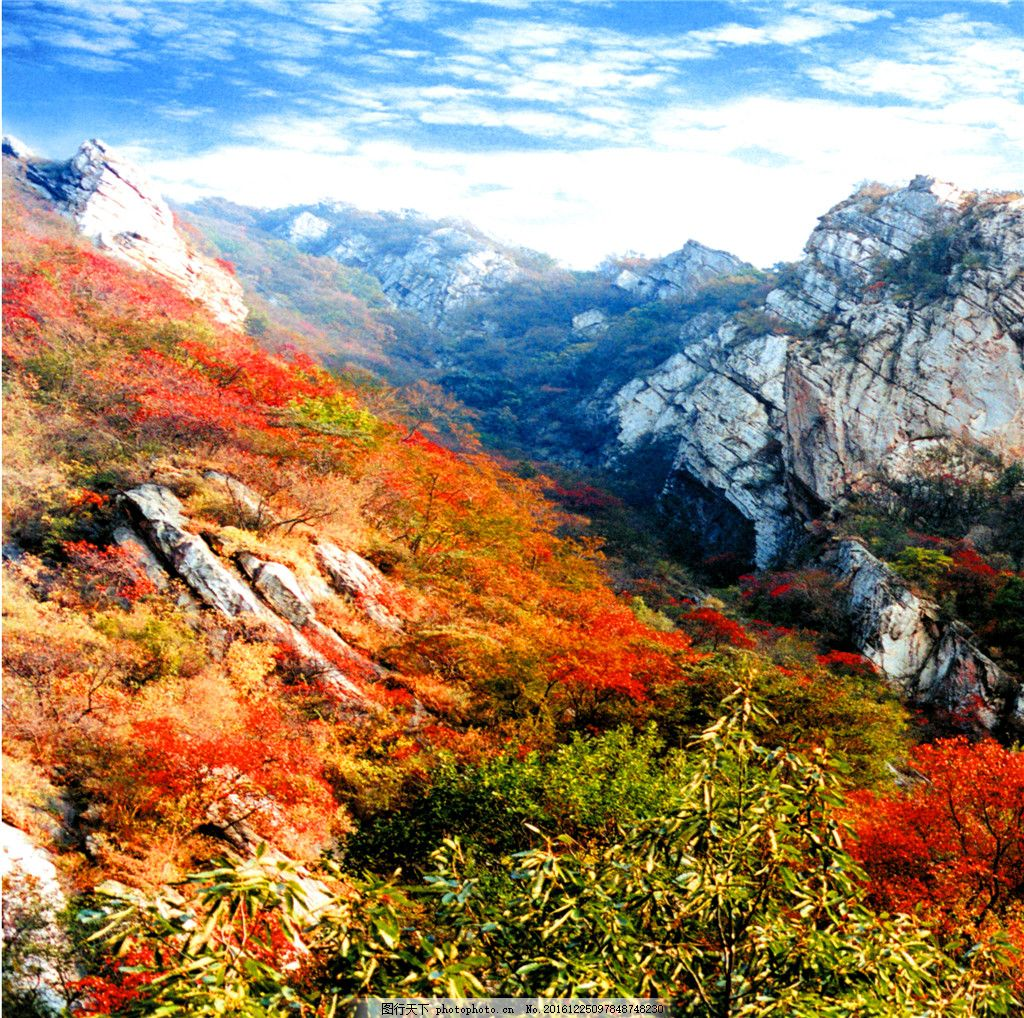 秋天风景装饰画 抽象油画 花卉装饰画 抽象画 绘画艺术 油画艺术 装饰