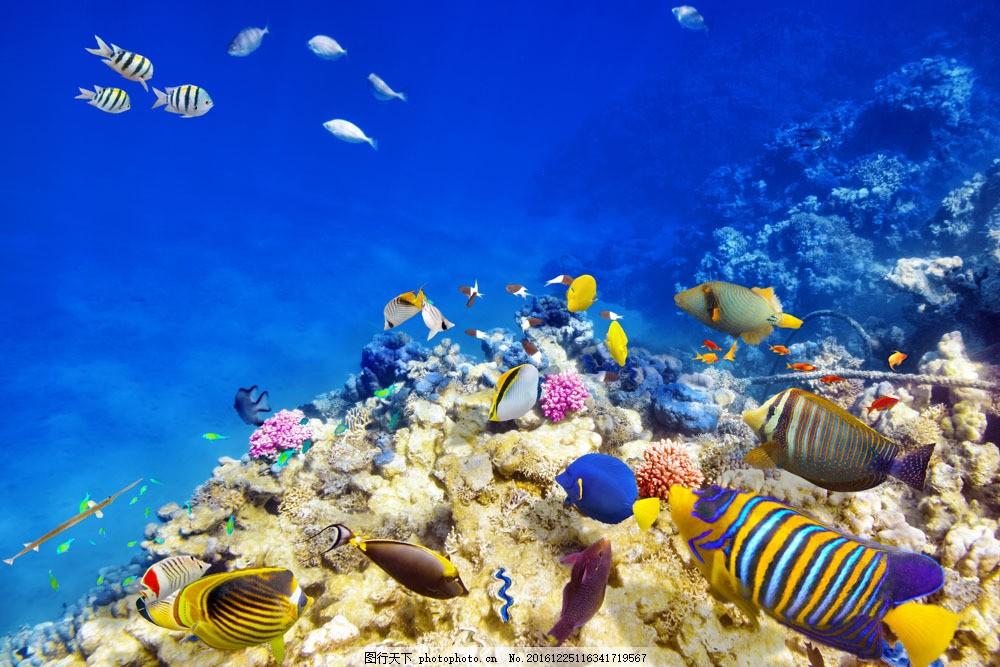 珊瑚与海底鱼群 珊瑚 海底鱼群 海底世界 海鱼 鱼类动物 海洋海边