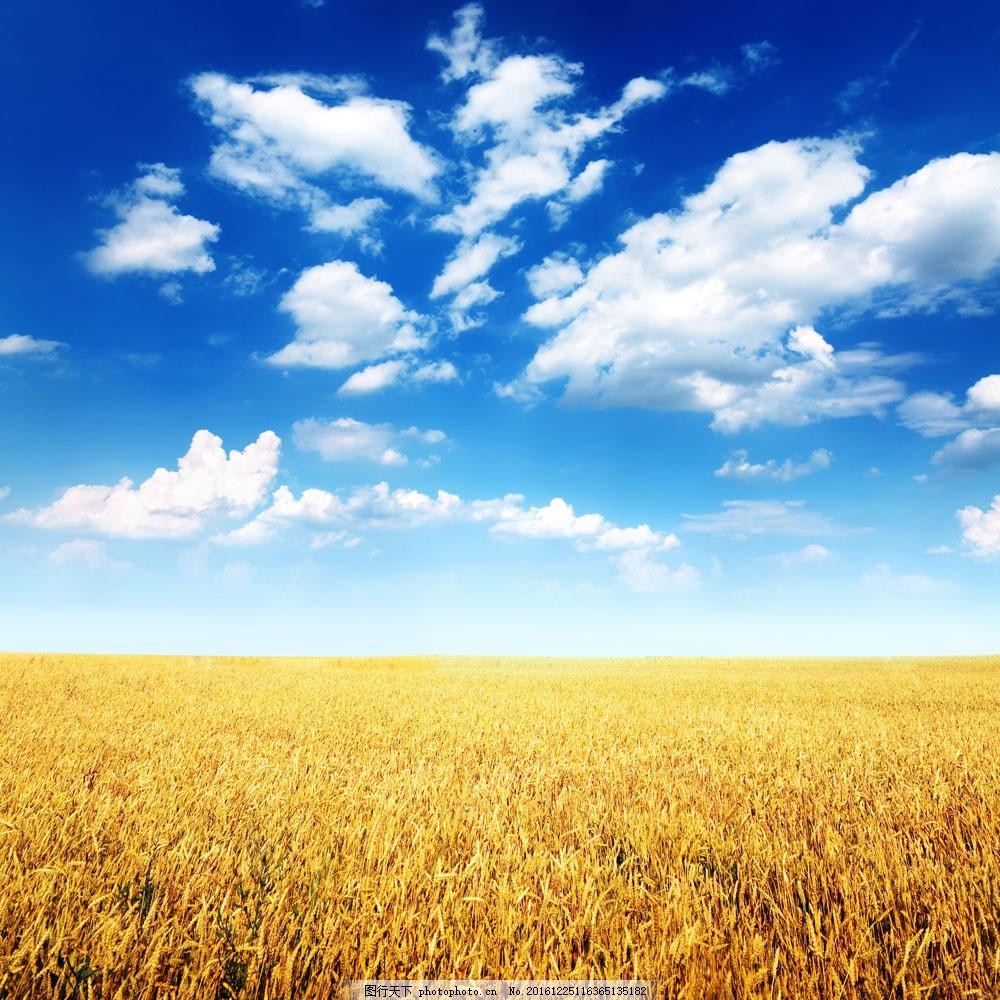 麦田图片素材 小麦 麦穗 麦子 麦田 秋天风景 田园风光 山水风景 风景