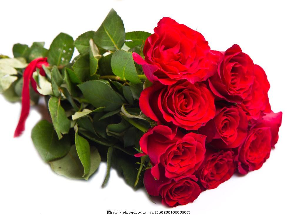 一束玫瑰花 一束玫瑰花图片素材 美丽鲜花 花瓣 植物花朵 漂亮花朵图片