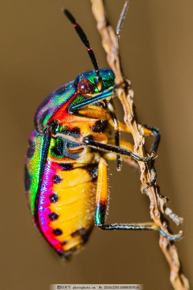 抓住树枝的彩色昆虫 抓住树枝的彩色昆虫图片素材 摄影 触角 陆地动物