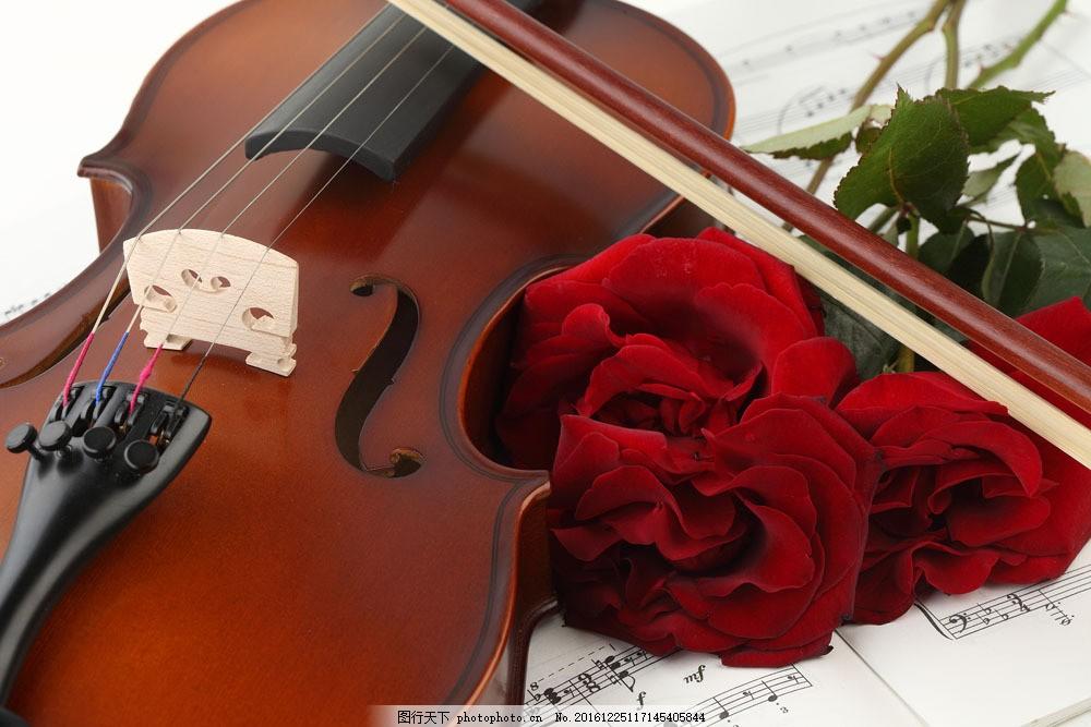 小提琴与玫瑰花五线谱图片