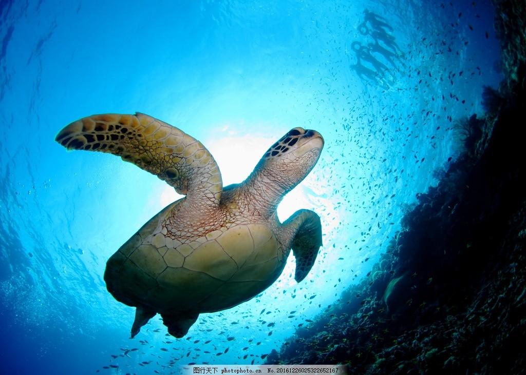 海龟 深海 鱼群 大海 海洋 鱼类 海鱼 海鲜 海底世界 壁纸