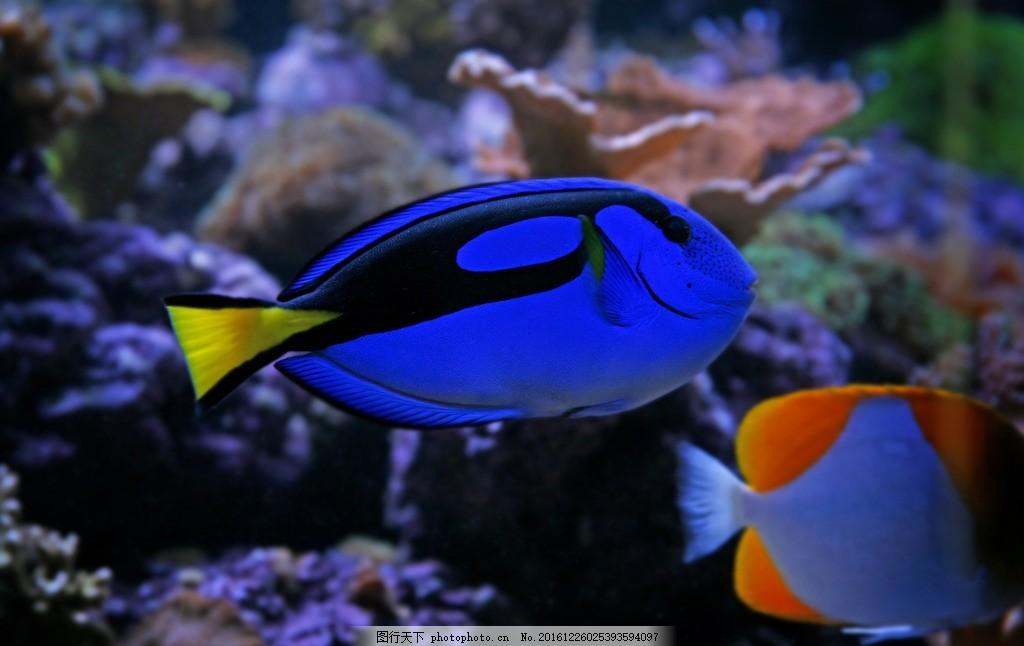 热带鱼 深海 鱼群 大海 海洋 鱼类 海鱼 海鲜 海底世界 壁纸