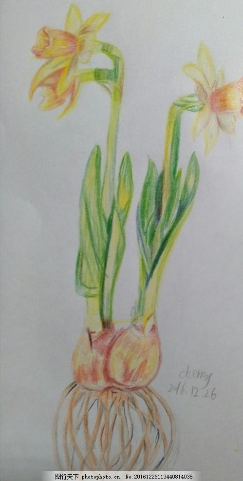 彩绘水仙花 彩绘 水仙花 彩铅画 春天 花朵 设计 文化艺术 绘画书法