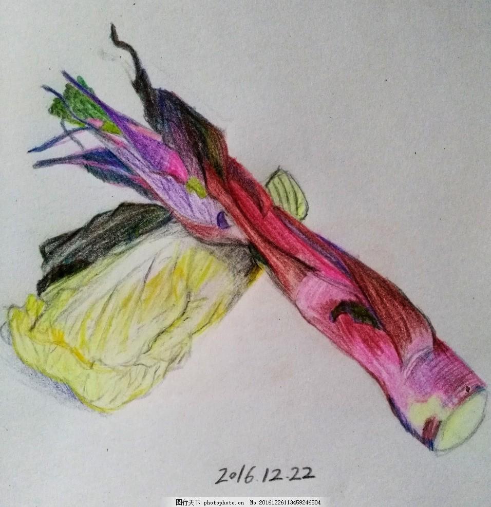白菜 红油菜 彩铅 手绘插图 蔬菜 设计 文化艺术 绘画书法 72dpi jpg