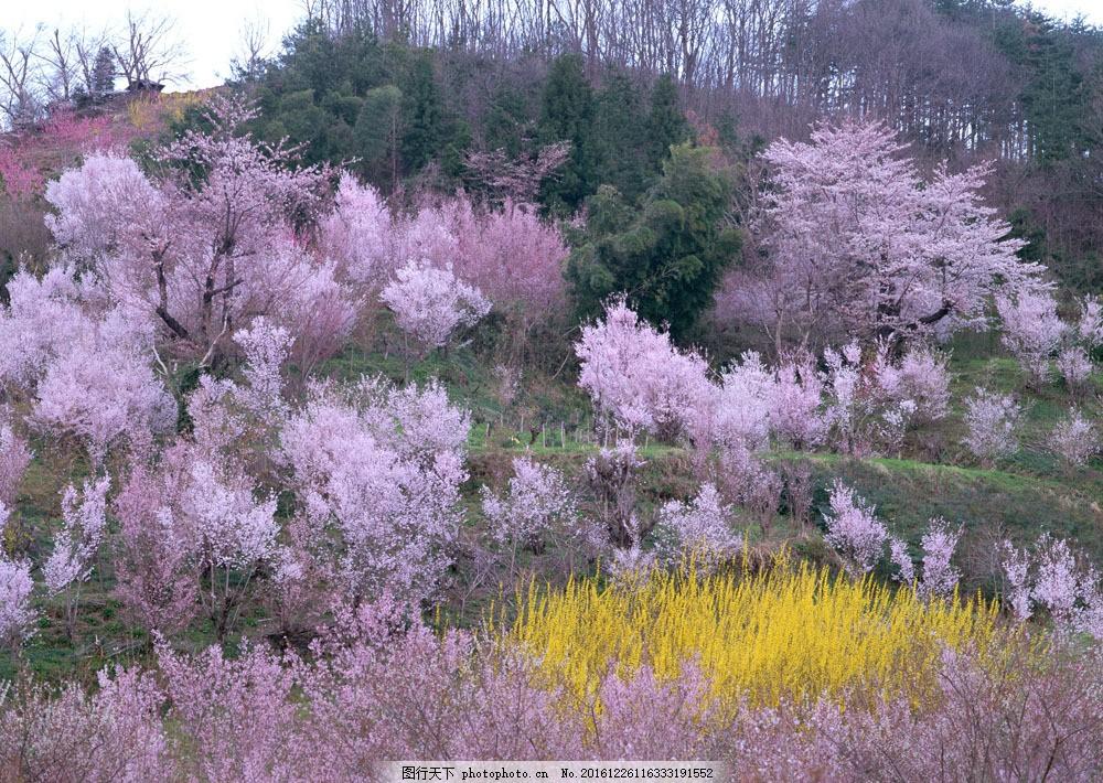 春天风景图片素材 四季风景 春天风景 树木 桃花 山水风景 风景图片