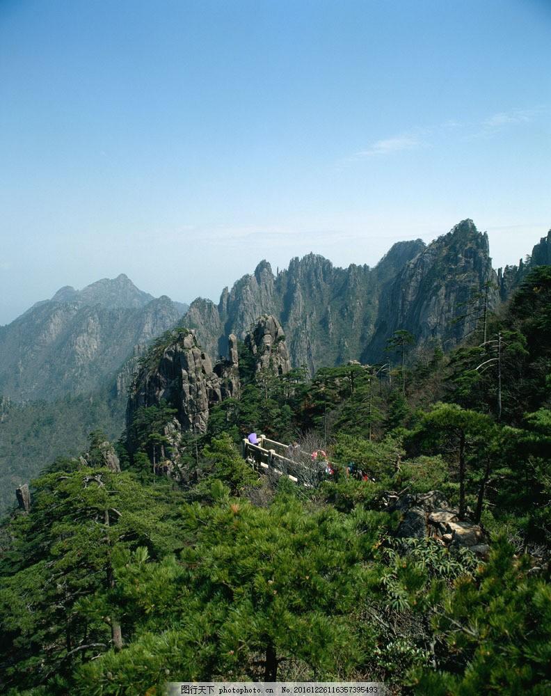 高山绿树森林景色图片