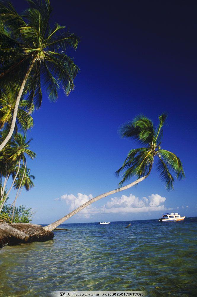 海岸椰子树与船只图片