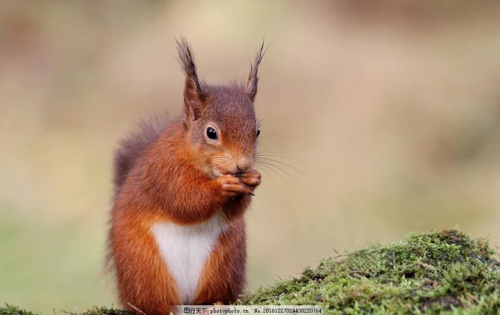 松鼠 唯美 可爱 野生 野生松鼠 摄影 生物世界 野生动物 350dpi jpg
