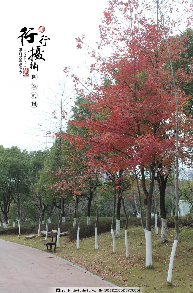 壁纸 枫叶 红枫 花 树 桌面 650_987 竖版 竖屏 手机图片
