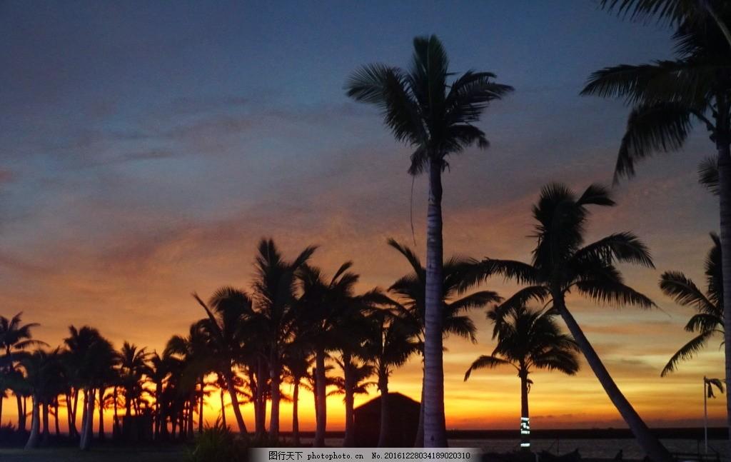 夕阳下的椰子树