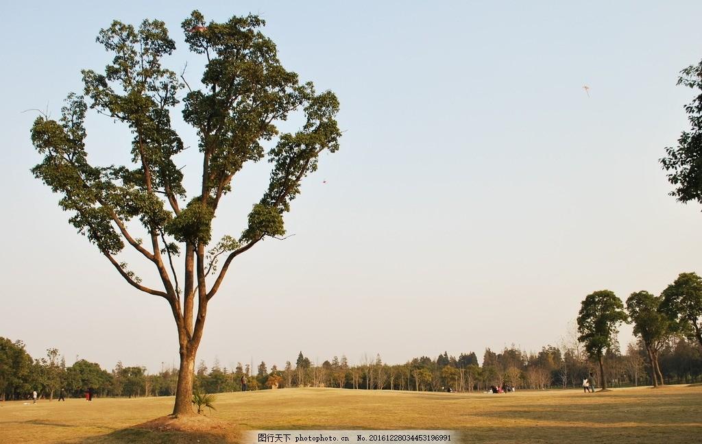 壁纸 一棵树 金色 晚霞 公园 绿树 太阳 摄影 自然景观 山水风景 300