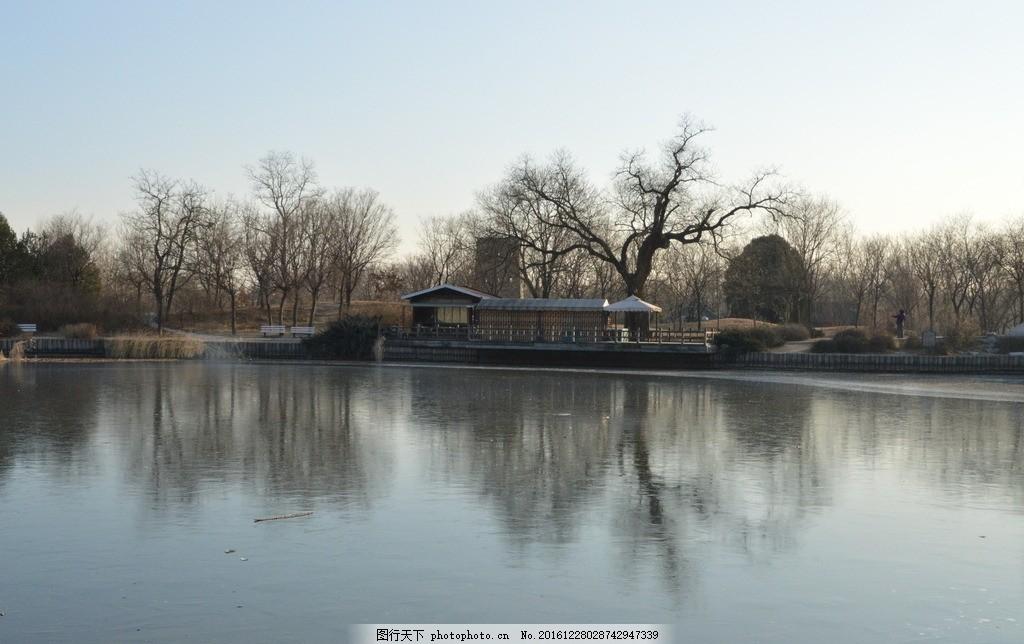冬日植物园 冬天 枯槐 枯树枝 槐树 冰湖 倒影 植物园风景 植物园美景
