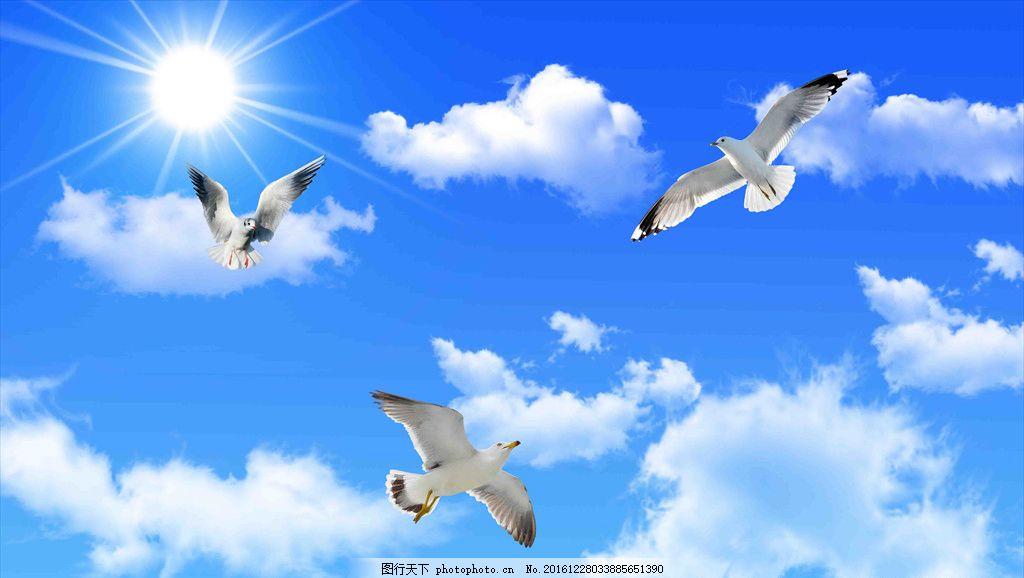 藍天白云 吊頂 天空 壁畫吊頂 海鷗 自然風景 壁畫 設計 其他 圖片