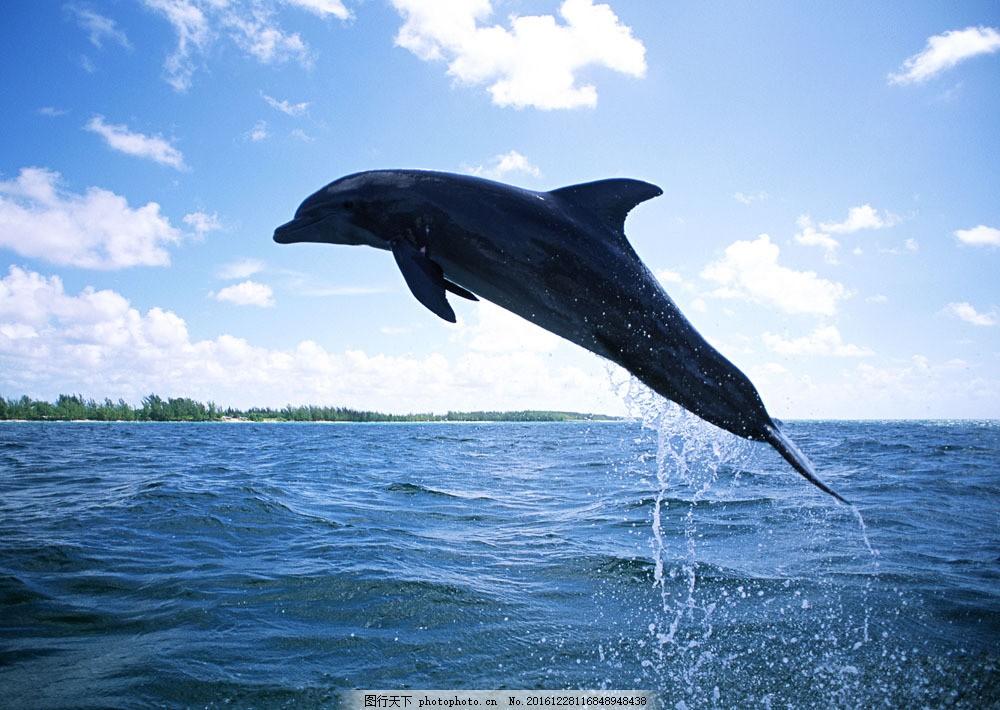 海豚摄影 海豚摄影图片素材 动物世界 生物世界 海底生物 大海